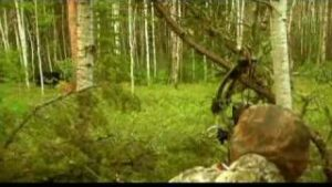 Read more about the article Fred Eichler's saskatchewan Black Bear Hunt – YouTube