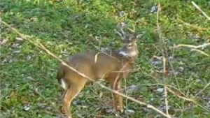 Read more about the article Fred Eichler's Whitetail Deer Hunt – YouTube