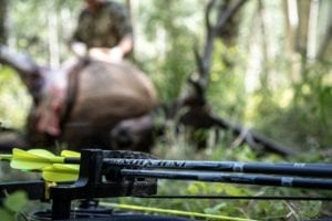 Read more about the article BOWHUNTING ELK: TWO PUBLIC LAND BULLS IN 37 HRS
