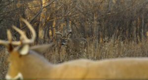 Using a Decoy for Bowhunting Whitetail Deer