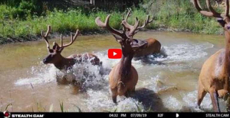 Fred Eichler - Trail Cams - Bowhunter Basecamp