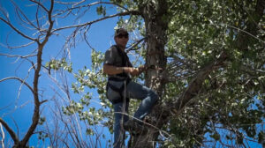 Tree Stand & Ground Blind Setup Expert Insights