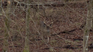 How Long Should I Sit In My Treestand?