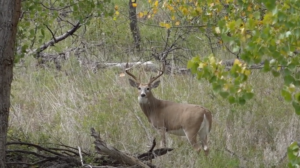 Read more about the article Field Judging Whitetail Deer