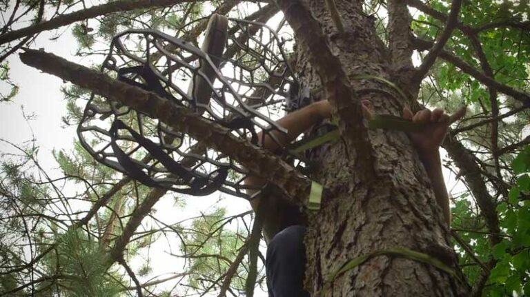 Treestand Placement